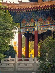 Yellow Gingkos an Daxingshan Temple.jpg (melissaenderle) Tags: architecture shaanxi buddhism xian asia seasons autumn weather china religion fall season