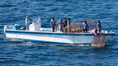 DF35-1 DUBAI 201911