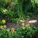 A garden in early summer (M Lizz) Tags: gardens