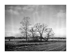 Lluvias Inquietas (4Rider) Tags: warmia północ north landscape krajobraz pejzaż photoartist drzewo drzewa tree trees las forest poems poetry
