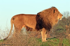 J78A1804 (M0JRA) Tags: wildlife parks doncaster people visitors animals lions tigers cats keepers otters otts