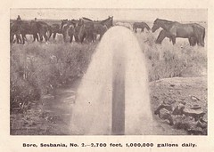 Bore No.2 at Sesbania near Winton, Qld - circa 1909 (Aussie~mobs) Tags: sesbaniabore winton queensland australia vintage 1908 water supply horses no2 bore sesbania