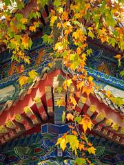 Cascading Color.jpg (melissaenderle) Tags: architecture shaanxi buddhism xian asia seasons autumn weather china religion fall season