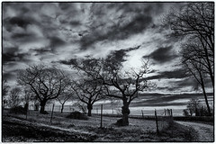 Samstagslandschaft - Dramatischer Mittagshimmel (J.Weyerhäuser) Tags: felder hechtsheim sonnenuntergang winter samstagslandschaft bw sw landscape sky clouds himmel wolken trees bäume