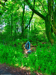 Scotland West Coast Inverkip an old car tyre being used as a swing on a farm 10 June 2019 by Anne MacKay (Anne MacKay images of interest & wonder) Tags: scotland west coast inverkip wood forest old car tyre swing farm 10 june 2019 picture by anne mackay