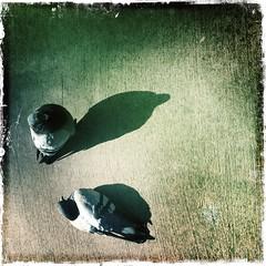 Shadow Creatures (Rantz) Tags: rantz mobilography 365 roger doesanyonereadtagsanymore victoria melbourne pbwa myoz bird kodotxgrizzledfilm hipstamatic birds pigeon pigeons johnslens animal