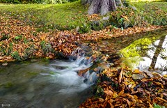 #River - 7818 (✵ΨᗩSᗰIᘉᗴ HᗴᘉS✵89 000 000 THXS) Tags: river nature automne autumn autumnleaves water waterfall leica leicaq belgium europa aaa namuroise look photo friends be yasminehens interest eu fr party greatphotographers lanamuroise flickering challenge