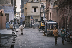 India - Bikaner - Street (dominik.lorenz) Tags: indien india rajasthan travel reise asian asien international spirituality fuji fujinon xt3 fujifilm xseries bikaner street cow kuh kid kids kinder kind xf1680mm dog hund
