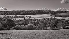 20191108-8510-Epen-bw (Rob_Boon) Tags: epen herfst heuvelland landscape on1 zwartwit robboon limburg netherlands blackwhite