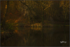 The Colors Of Autumn Have Gone.. (Picture post.) Tags: landscape nature green water reflections woods trees paysage arbre