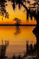 Cypress Orange Crush_MG_6711 (Alfred J. Lockwood Photography) Tags: dawn sunrise flora cypresstree spanishmoss louisiana atchafalayabasin cajuncountry iberiaparish autumn fall reflection lake landscape silhouette alfredjlockwood nature