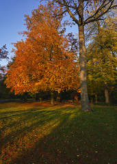 Licht und Schatten (KaAuenwasser) Tags: park licht laub herbst natur wiese blatt blätter bäume morgen schatten garten baum stimmung rasen schlossgarten buche sonnenlicht herbstlich eingefärbt
