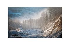 At Wintertime (My digital Gallery) Tags: bregenzerwald austria europe eu winter fog frost sun sonne streiflicht trees bäume nebel wintertag sonnig wintersday snow schnee vorarlberg