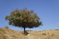 "Simpleness (""S.L"") Tags: nikon nature landscape sky tree blue green horizon leafs earth relax power simplicity yellow stone air art artistic imaginative"