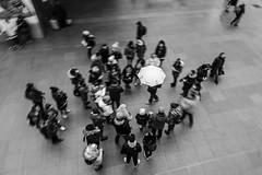 Walking tour (koen_jacobs) Tags: streetphotography blackandwhite blur antwerp