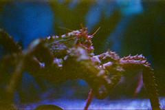 (Just A Stray Cat) Tags: 35mm 35 mm film analog analogue olympus stylus epic mju mjuii montreal canada ontario quebec toronto konica minolta centuria8 00 expired ripley s aquarium