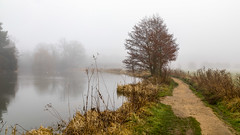 Waverley Abbey Lake (THE NUTTY PHOTOGRAPHER) Tags: waverleyabbey footpath trees mistymorning mist