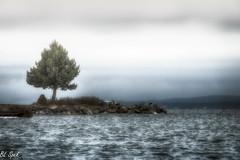 Moody in December (Take Two) Tags: moody water sea waves overcast sky seascape landscape vancouverisland britishcolumbia grey beach rocks roughsea winter