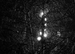 luces y sombras del otoño (gabrielg761) Tags: luces sombras otoño farola arbol ramas
