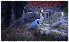 Grue (Honi soit qui mal y pense) Tags: nippon fleurdesel oiseau grue