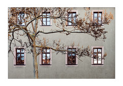 A Wise Guy (Thomas Listl) Tags: thomaslistl color tree nature facade windows branches mood geometry wood house 50mm