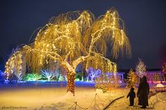 MCE_5580thlights1jsm (JayEssEmm) Tags: tower hill botanic garden boylston massachusetts night lights holiday christmas snow winter
