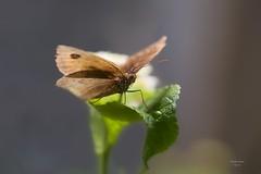 Borboleta (Carlos Santos - Alapraia) Tags: ngc flickrcentral ourplanet animalplanet canon nature natureza wonderfulworld highqualityanimals unlimitedphotos fantasticnature butterfly borboleta