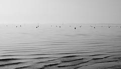 Désorganisé (Vuzz) Tags: sea seascape seaside blackandwhite grey bassin darcachon taussat