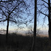 A cold one... (mark.griffin52) Tags: england hertfordshire ashridgeestate winter silhouettes countryside bluesky forest trees woodland