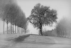 ...mein Freund der Baum... (shallowcreek) Tags: blackandwhite baum tree natur nature landscape landschaft