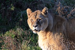 J78A1859 (M0JRA) Tags: wildlife parks doncaster people visitors animals lions tigers cats keepers otters otts