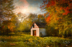 Hidden house (Jean-Michel Priaux) Tags: paysage nature landscape house forest tree trees colors home paint painting luminar hidden lonely lonesome alone priaux flowers autumn