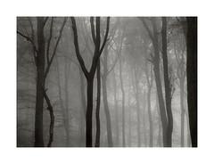 November-Wood (Wolfgang Moersch) Tags: fp4 tanol kallitype palladiumtoner