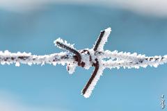 chilly morning ... (N.Batkhurel) Tags: season winter snow ice mongolia metall closeup macro ngc nikon nikond5200 nikkor natur nikkor105mm