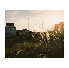 #0260 (Masami H.) Tags: 6x7 film analog mediumformat pentax67 kodakportra160 landscape