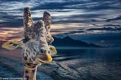 Giraffe_Lofoten (Lothar Heller) Tags: lotharheller norwegen giraffe lofoten norge norway photoshop sea skandinavia skandinavien sky