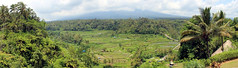 Maha Giri (ZdArock) Tags: ricefield rice riz field terrace terrasse mahaigiri bali indonesia indonesie zdarock pano panorama palmtree cocotier noixdecoco ficus arbre tree green vert volcan volcano cloudy nuageux agung batur sidemen karangasem