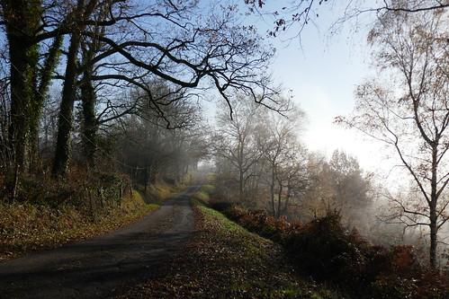 Brumes matinales sur le chemin de Prim, Bosdarros, Béarn, Pyrénées Atlantiques, Nouvelle-Aquitaine, France.