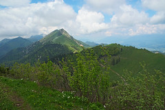 Spring in the mountains (LB1415) Tags: spring may green leaves foliage daffodils path pentax k200d clouds blue sky outdoor walking nature golica karavanke slovenia lb1415 allrightsreserved trees forest mountains