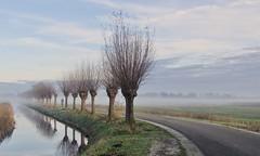 In The Misty Lowlands (andzwe) Tags: knotwilgen mist fog pollardwillows cyclist biker bike netherlands nederland nederlandslandschap dutchlandscape overijssel giethoorn dutchvenice hollandsvenetië panasonicdmcgh4 bocht curve wielrenner vorst frost cold kou autumn winter reflectie reflection bare kaal baretrees tklooster deauken berm icy solitaryfigure 2019 lowlands cycling nevel innevelengehuld innevelgehuld poetic poetisch painting eenzamefietser vanishingpoint verdwijnpunt panachallenge winner best2019 1stplace inthemistylowlands mistylowlands andzwe ©