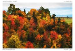 Couleurs d'automne (BerColly) Tags: france auvergne cantal automne autumn couleurs colors arbres trees feuillages foliages bercolly google flickr