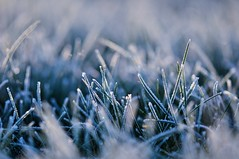 Frozen grass (~ Jessy S ~) Tags: nikon nikkor 105mm 105 macro 28 frost frozen gel herbe grass blue morning matin bleu ice cold froid glace micro macrophotography macrophotographie macroworld nature 5000 bokeh frosty winter hiver