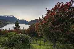 Landscape with firebush (tmeallen) Tags: notro chileanfirebush chileanfiretree embothriumcoccinium lake mountains snowcovered sunrise greengrass rusticfence hdr travel remote carreteraaustral coyhaique patagonia chile landscape