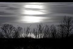 Thief (stevenbulman44) Tags: sunny bright ice reservoir canon filter calgary alberta tree shine sticks outdoor landscape 2470f28l lseries bw