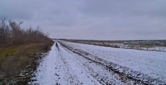 Forest belt in Orenburg oblast (МирославСтаменов) Tags: russia orenburg steppe belt snow cloudscape november