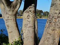 Natural graffiti (sander_sloots) Tags: mardalup park trees marks swan river perth dctz90 lumix panasonic waterfront bomen australia west australië western tree boom baum