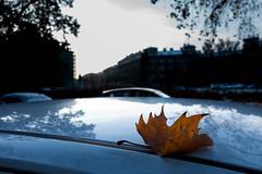 DSC06536 (romainlettuce) Tags: sonyrx100iv magyarország budapest streetphotography vikerület light shadows