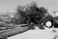 DSC_6933 (mathendrix) Tags: 2018 africa blackwhite essaouira homedeveloping kodaktmax400 leicacl leicasummicron40mm marroco roll2 analog