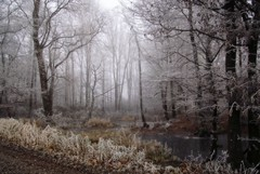 ...frosty... (shallowcreek) Tags: fantasy winter natur nature teich pond baum tree wald forest eis ice raureif frost nebel fog landschaft landscape austria