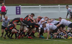 Preston Grasshoppers 13 - 18 Hull December 07, 2019 49696.jpg (Mick Craig) Tags: action pro hull sportsman fulwood rugby maul semipro preston grasshoppers man ruck scrum lineout lightfootgreen union agp sport rfu lancashire hoppers uk rugger